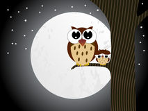 Owl sit on branch with baby owl Stock Images