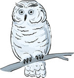 Owl sits on the branch. Single white owl sits on the branch vector illustration