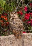 Owl sits among flowering shrubs Royalty Free Stock Image