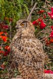 Owl sits among flowering shrubs Stock Photography