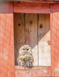 Owl sits in nesting box Stock Photos