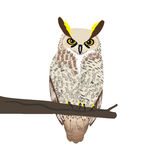 Owl sits on a tree branch. Royalty Free Stock Images