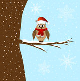 The owl sits on a tree branch Royalty Free Stock Photo