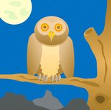 Owl sits on tree in the night Stock Photography