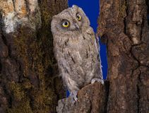 Owl sits on a tree in the wood Stock Photo