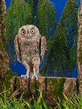 Owl sits on a tree in the wood Stock Images