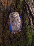 Owl sits on a tree in the wood Stock Photography