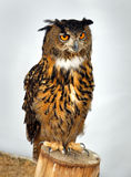 An owl sitting on a column Royalty Free Stock Photography