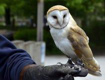 AN OWL Stock Photography