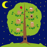 Owl sitting at night on the tree, funny owls Royalty Free Stock Photography
