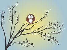 Free Owl Sitting On Tree Royalty Free Stock Photography - 34654227