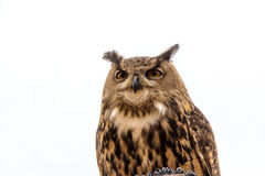 Owl. An owl sitting on a perch Stock Photography