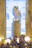 Owl sitting on stump Royalty Free Stock Images