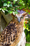 Owl sitting on the tree Royalty Free Stock Images