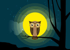 Owl sitting on a tree branch background of the moonlight Royalty Free Stock Photography