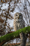 Owl sitting on tree branch Stock Image