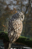 Owl sitting on tree branch Stock Images