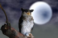Owl sitting on tree branch with full moon Royalty Free Stock Photos