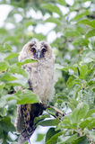 Owl sitting on a tree branch Stock Image