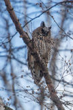 Owl sitting on tree branch royalty free stock image