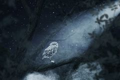 Awakening owl sitting on tree illuminated by bright moonlight. Owl sitting on tree illuminated by bright moonlight Stock Photography