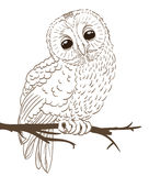 Owl sitting on a twig. Hand drawing. vector vector illustration