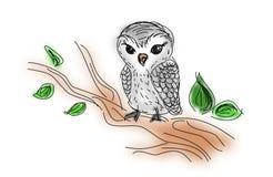 Owl sitting on twig of tree Royalty Free Stock Photos