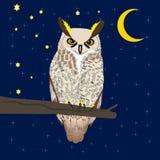 Owl sitting at woods under moon stock illustration