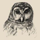 Owl sketch drawn hands. Hand drawn owl in pencil. Vector illustration. Sketch owl vector illustration