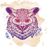 Owl sketch isolated on grunge background Royalty Free Stock Photo