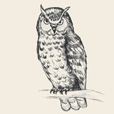 Owl Sketch. Pencil sketch of an owl traced in vector format vector illustration