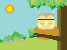 Owl sleep on nest Stock Photo
