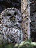 Owl In Solitude Lizenzfreies Stockfoto