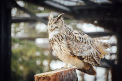 An owl stand on the log stock images