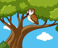 Owl stands on branch at daytime Stock Images