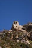 Owl stone Stock Image
