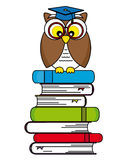 Owl student Stock Image