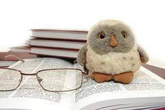 Owl a symbol of wisdom and knowledge Stock Photography