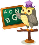 Owl teacher Stock Photos