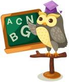 Owl teacher Stock Photos