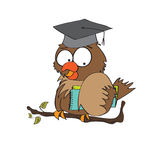 Owl Teacher Stock Image