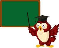Owl teacher copy space for own text on blackboard Stock Images
