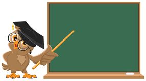 Owl Teacher Holding Pointer At Blackboard Stock Photos