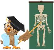 Owl Teacher Lección de la anatomía, el estudio del esqueleto humano Foto de archivo