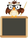 Owl Teacher with School Board Stock Photo