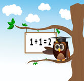 Owl teaching above the tree. Owl teaching to count above the tree with white borad Royalty Free Stock Images