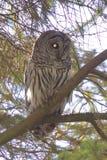 Owl - terminator Stock Images