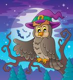 Owl theme image 3 Stock Photography