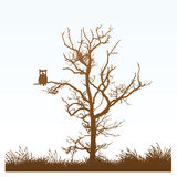 Owl In A Tree Royalty Free Stock Photography