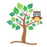 Owl on tree Royalty Free Stock Image